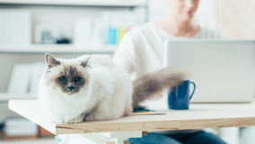 Gato bonito que levanta em uma mesa Imagens de Stock Royalty Free