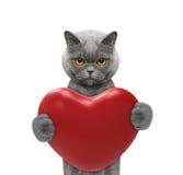 Gato bonito que lleva a cabo un corazón Fotografía de archivo