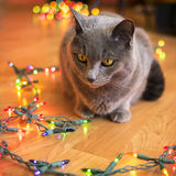 Gato bonito que olha luzes de Natal Imagens de Stock Royalty Free