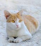 Gato bonito que senta-se no assoalho Imagem de Stock