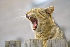 Gato bonito rujir Foto de Stock Royalty Free