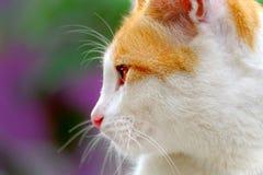 Gato bonito visto do lado Imagens de Stock Royalty Free