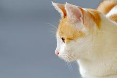 Gato bonito visto do lado Fotografia de Stock