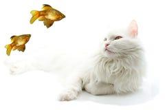 Gato branco. Imagem de Stock