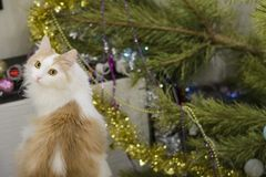 gato Branco-bege no fundo de uma árvore de Natal arruinada fotos de stock royalty free