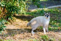 Gato branco bonito Fotos de Stock Royalty Free