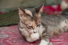Gato branco e bonito preto pequeno Foto de Stock Royalty Free