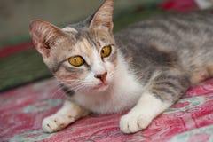 Gato branco e bonito preto pequeno Fotos de Stock Royalty Free