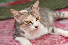 Gato branco e bonito preto pequeno Fotografia de Stock Royalty Free