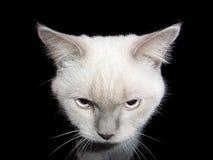 Gato branco em um quarto escuro Fotografia de Stock Royalty Free