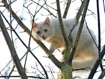 Gato branco em uma árvore Fotografia de Stock