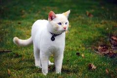 Gato branco na grama Fotos de Stock