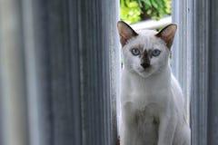 Gato branco na janela Fotografia de Stock Royalty Free