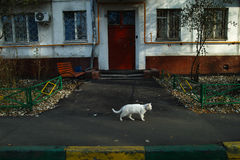 Gato branco na rua Imagem de Stock Royalty Free