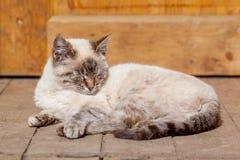 Gato branco no patamar Imagem de Stock Royalty Free