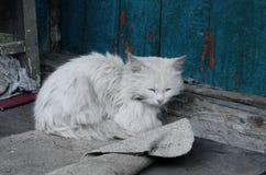 Gato branco no patamar da vila imagens de stock