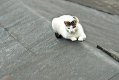 Gato branco no telhado Imagem de Stock Royalty Free