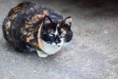 Gato branco preto do gengibre que senta-se no pavimento foto de stock