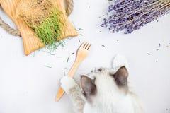 Gato branco que guarda a disposição lisa da parte inferior de madeira descartável ambiental da forquilha imagens de stock royalty free