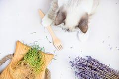 Gato branco que guarda a disposição lisa superior da forquilha de madeira descartável ambiental fotografia de stock