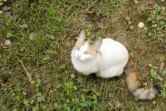 Gato branco que senta-se na terra com grama Imagem de Stock Royalty Free
