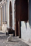 Gato branco que senta-se pela casa velha Foto de Stock