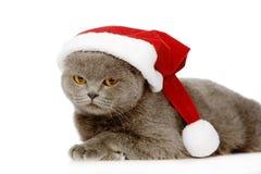 Gato británico del shorthair con el sombrero de santa en el backgrou blanco Imagenes de archivo