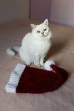 Gato británico que se sienta en una cama con el casquillo rojo listo por Año Nuevo Imágenes de archivo libres de regalías