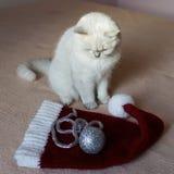 Gato británico que se sienta en una cama con el casquillo rojo listo por Año Nuevo Fotos de archivo