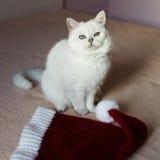Gato británico que se sienta en una cama con el casquillo rojo listo por Año Nuevo o Imagen de archivo