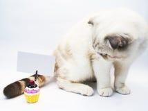 Gato britânico do shorthair Fotografia de Stock Royalty Free