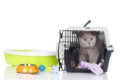 Gato británico del pelo corto que se sienta en una caja del transporte Imagen de archivo libre de regalías
