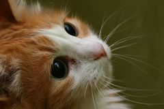 Gato, cabeça macro fotos de stock royalty free