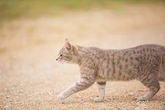 Gato callejero Fotos de archivo