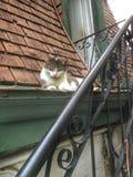Gato callejero Fotos de archivo libres de regalías