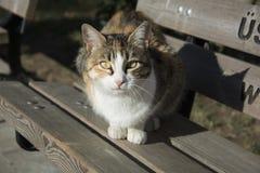 Gato callejero Imágenes de archivo libres de regalías
