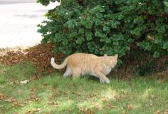 Gato callejero en el parque Imágenes de archivo libres de regalías