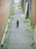 Gato callejero, parque de Hampden, East Sussex, Reino Unido imágenes de archivo libres de regalías