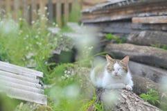 Gato calmo Fotografia de Stock Royalty Free