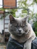 Gato cansado en el jardín fotografía de archivo libre de regalías