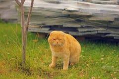 Gato cansado na grama Imagens de Stock Royalty Free