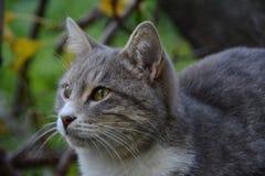 Gato casero agradable Fotos de archivo