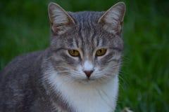 Gato casero agradable Fotografía de archivo libre de regalías