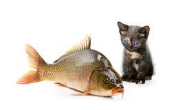 Gato casero y un pescado de la carpa Fotografía de archivo