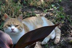 Gato-cazador Imágenes de archivo libres de regalías