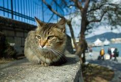 Gato cerca de la bahía Fotografía de archivo
