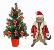 Gato cerca del árbol de navidad fotos de archivo libres de regalías