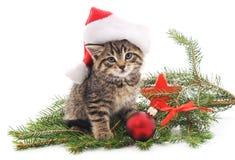 Gato cerca del árbol de navidad Imagenes de archivo