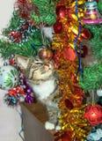Gato cerca del juguete de la Navidad del frotamiento del árbol de navidad Fotografía de archivo