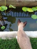 Gato cerca la piscina y la mirada abajo Imágenes de archivo libres de regalías